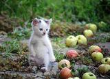 Толкова много ябълки ... и нито една мишка... ; comments:17