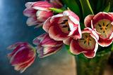 Искам да е пролет ; comments:43