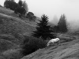Утро в планината ; comments:91