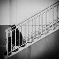 стълбата ; comments:68