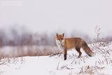 Зимна идилия ; comments:79