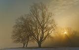 Мъгливи лъчи ; comments:57