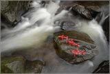 Три червени риби ; comments:16