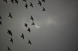 Гълъбово затъмнение ; comments:12