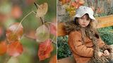 Есенни настроения ; comments:40