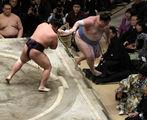 sumo ; comments:5