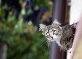Кво ме гледаш? И ти имаш косми в ушите! ; comments:11