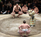 sumo ; comments:10