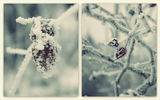 Студ ! ; comments:30