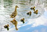 Разходка с две майки ; comments:6