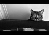 И котката дори ме гледа отвисоко ; comments:45