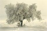 Зима ; comments:62