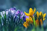 Пролетно утро ; comments:56