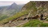 планински керван ; comments:192