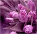 Честита пролет на всички! ; comments:62
