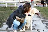 За животните с любов! ; comments:1