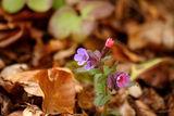 Пролетно ; Comments:41