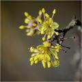 С дъх на пролет............! ; comments:30
