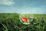риба на сухо ; comments:23