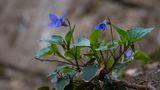 нежно...пролетно...синьо ; Comments:4