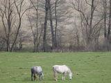коне на паша ; comments:4