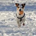 Куче с топка ; comments:10