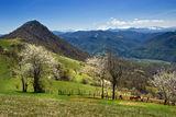 свежо,пролетно и пасторално ; comments:48