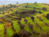 Родопска пролет ; comments:50