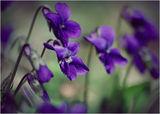 Пролетно ! Добро утро !!! ; comments:38
