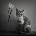 Натюрморт с котка ; comments:18