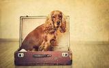 """""""Готова съм с багажа"""".... ; comments:26"""