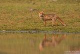 Лисицата и езерото ; comments:25
