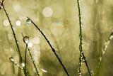 Роса 2011 ; comments:16