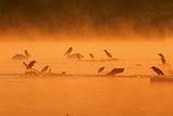 утринна мъгла ; comments:32