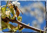 Пролетни Нюанси ; comments:3