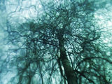 Dreaming Tree Series (P5010201) ; Comments:12