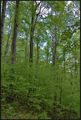 Пролетно зелено... ; comments:4