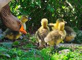 Среща с едно мило семейство! ; comments:4