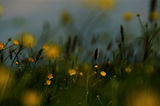 Тайнственият Живот на Растенията ; comments:19