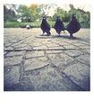 Трите гугутки ; Comments:10