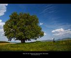 Дърво на живота ; comments:44