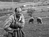 Овчар пред вратите на рая ; comments:20