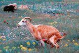 всички живи същества си имат нужди... :) ; comments:8