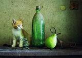 С котка ; comments:22