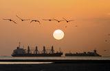 Пеликани, чайки и кораби на залез. ; comments:44