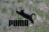 Chillout Puma :D ; comments:23