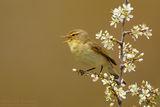 Пролетни песни ; comments:18