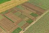 Селскостопански работници до с. Щръклево, Област Русе ; Comments:18