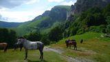 ...райските коне ; Comments:3