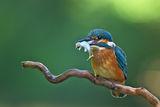 Рибарче със закуска ; comments:41